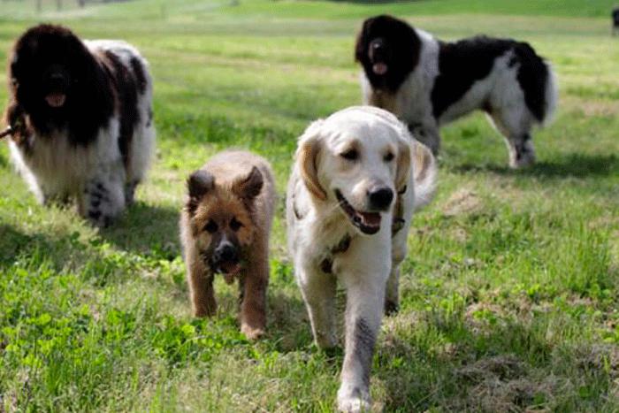sgambatura-cani